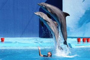 Vacanze per famiglie a roma hotel per famiglie a roma recensioni hotel - Bagno coi delfini roma ...