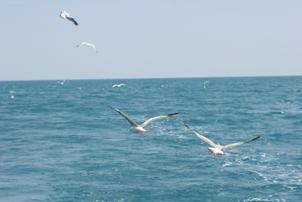 Maggio vacanze mare offerta hotel bruna offerte e vacanze al mare